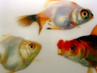 Collision detection hiccups due to our fish ancestry for Your inner fish sparknotes